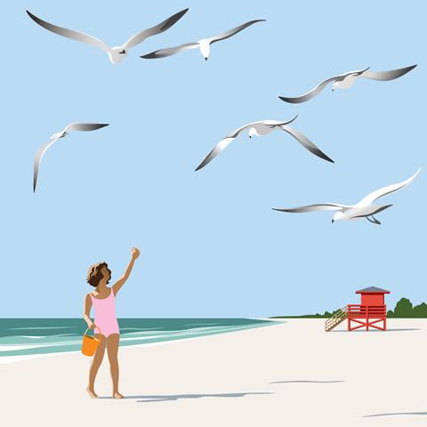 Siesta Key Seagulls